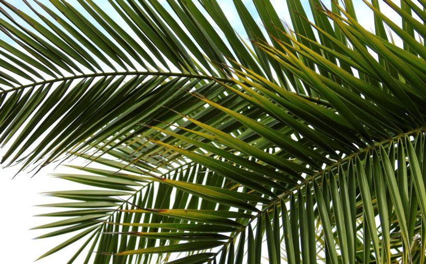 Lenten Reflections: The Fifth Sunday Of Lent: Palm Sunday